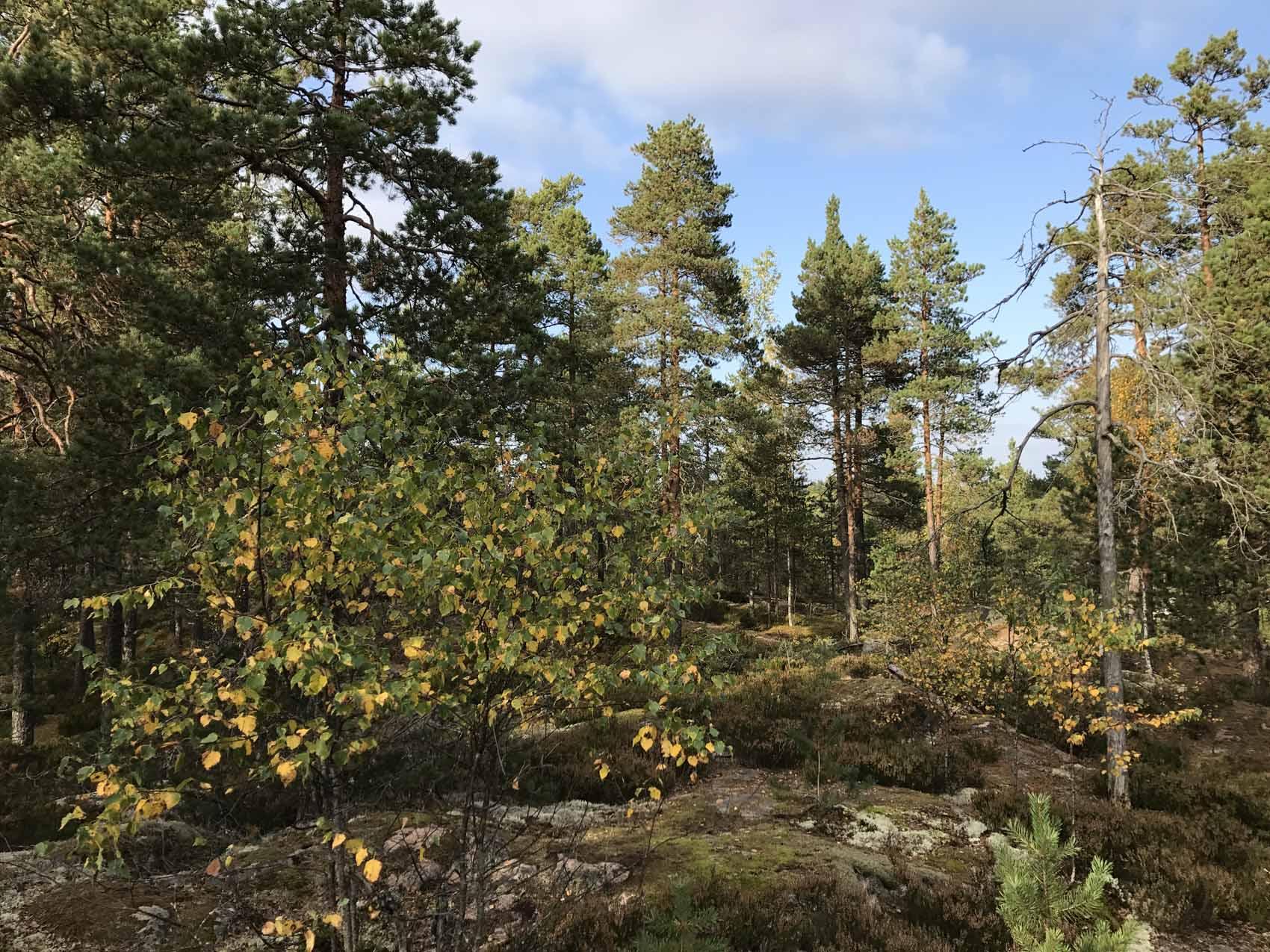 Nuuksio Vihti Suomi metsä