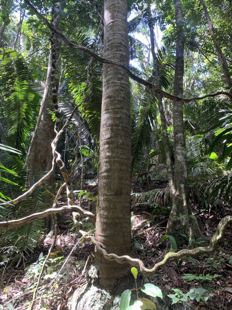 belizeläinen viidakko
