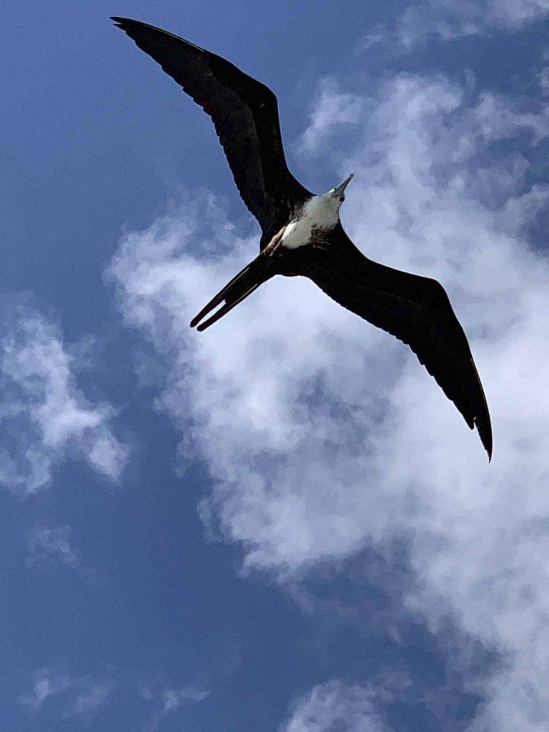 paikallinen lintu
