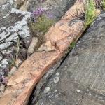 Kaunissaaren kalliot ja käärme