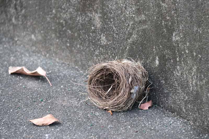 linnunpesä