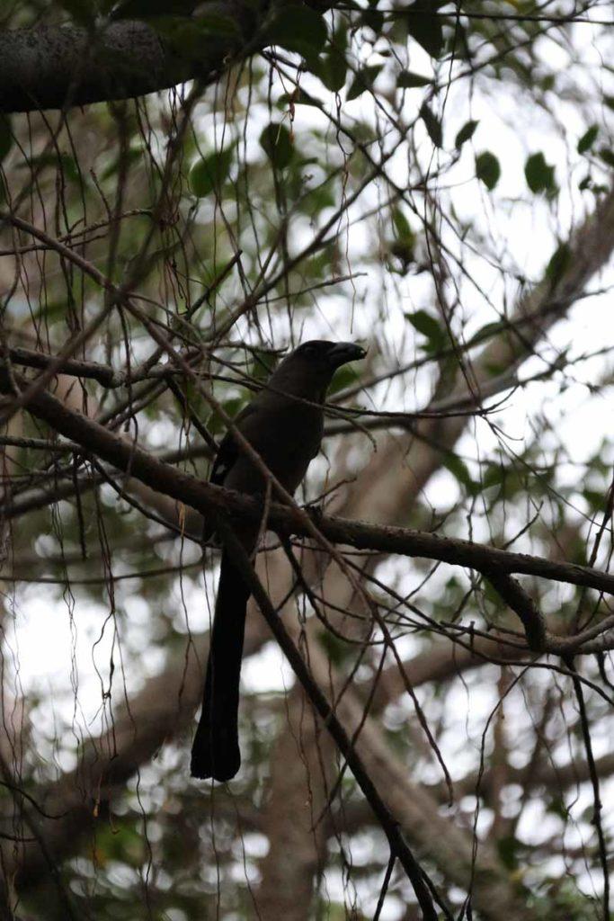 lintu Hualienissa