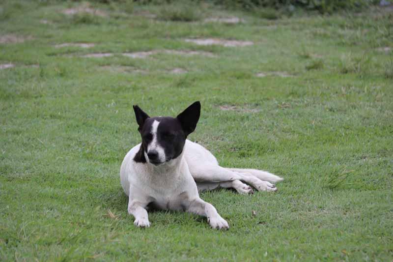 koira Hualienissa
