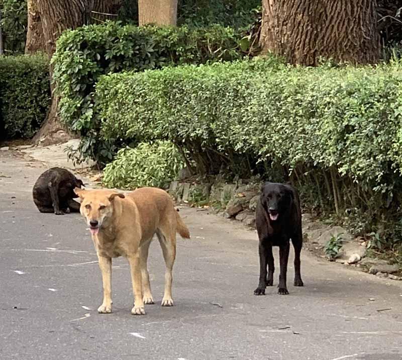 koirat Hualienissa