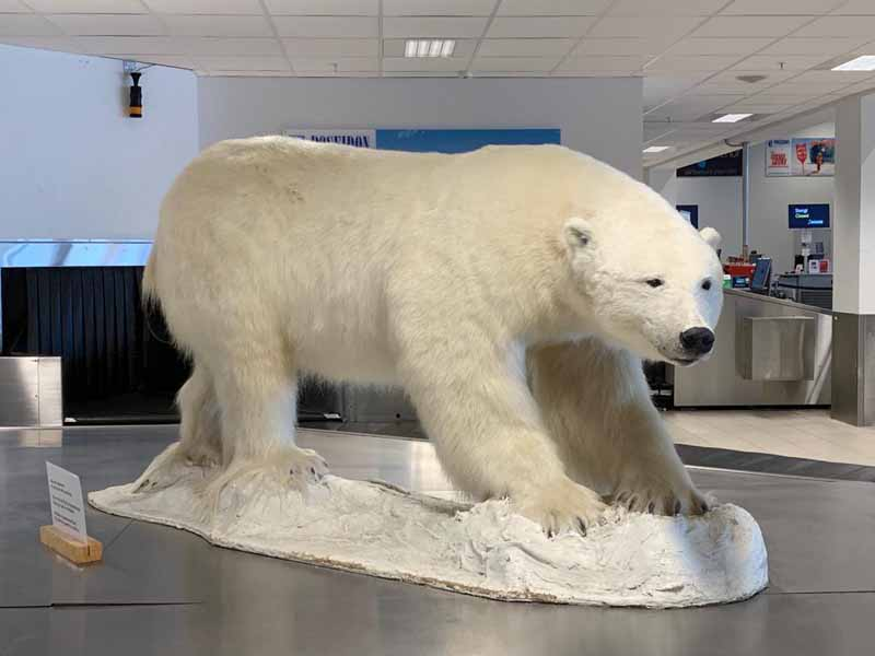 Longyearbyen jääkarhu