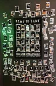 Brewdog Indianapolis Paws of Fame wall