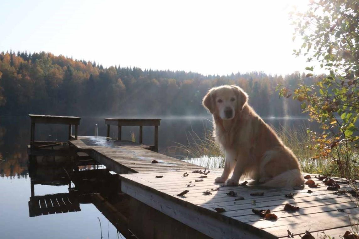laituri koira järvi dock dog lake Finland