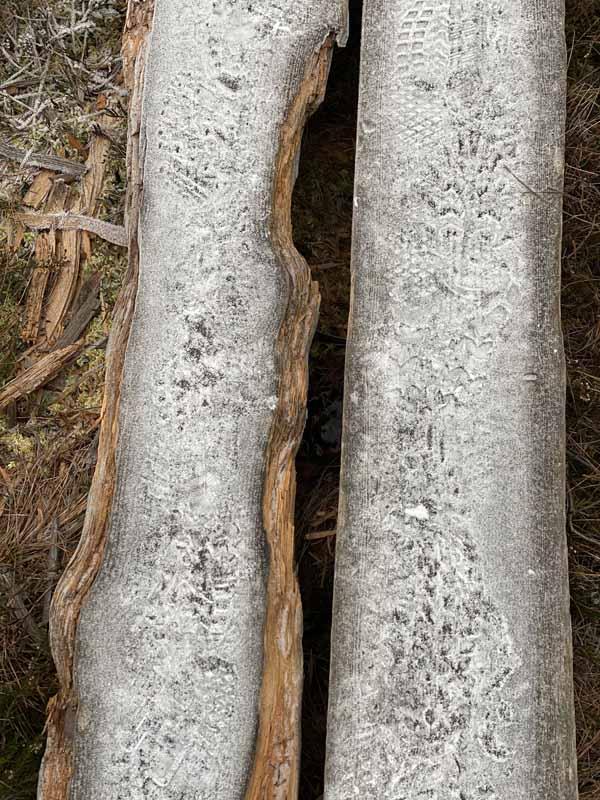 pitkospuut Torronsuo