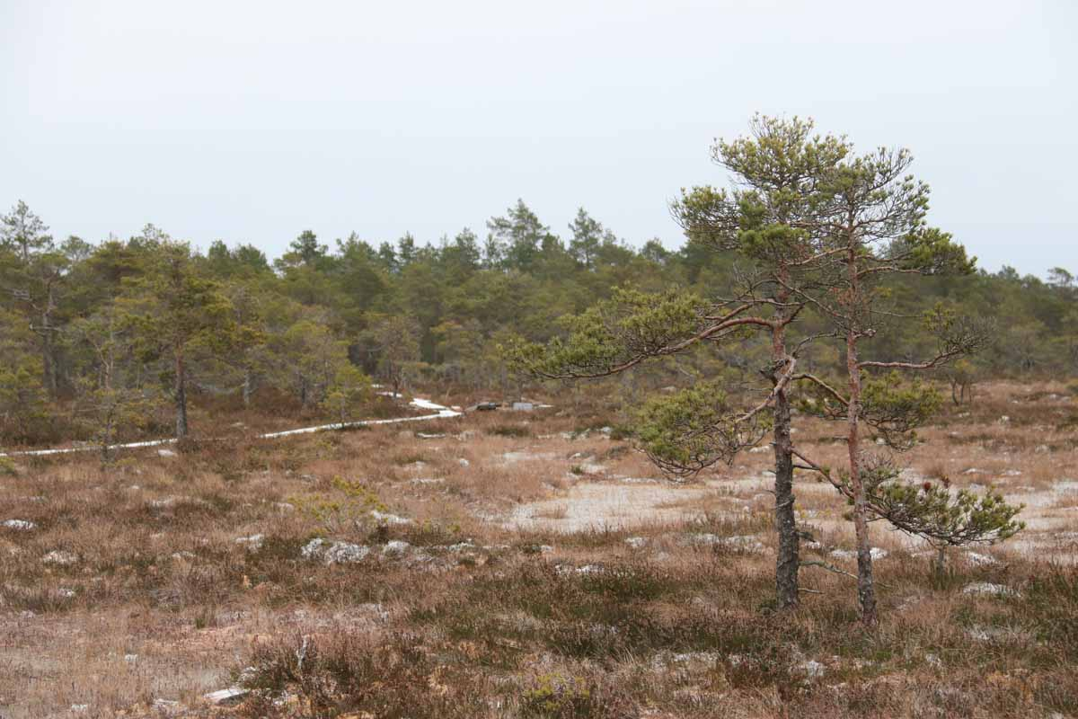 Torronsuo Torronsuon kansallispuisto