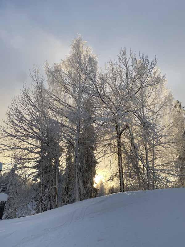 puut kuura huurre talvi