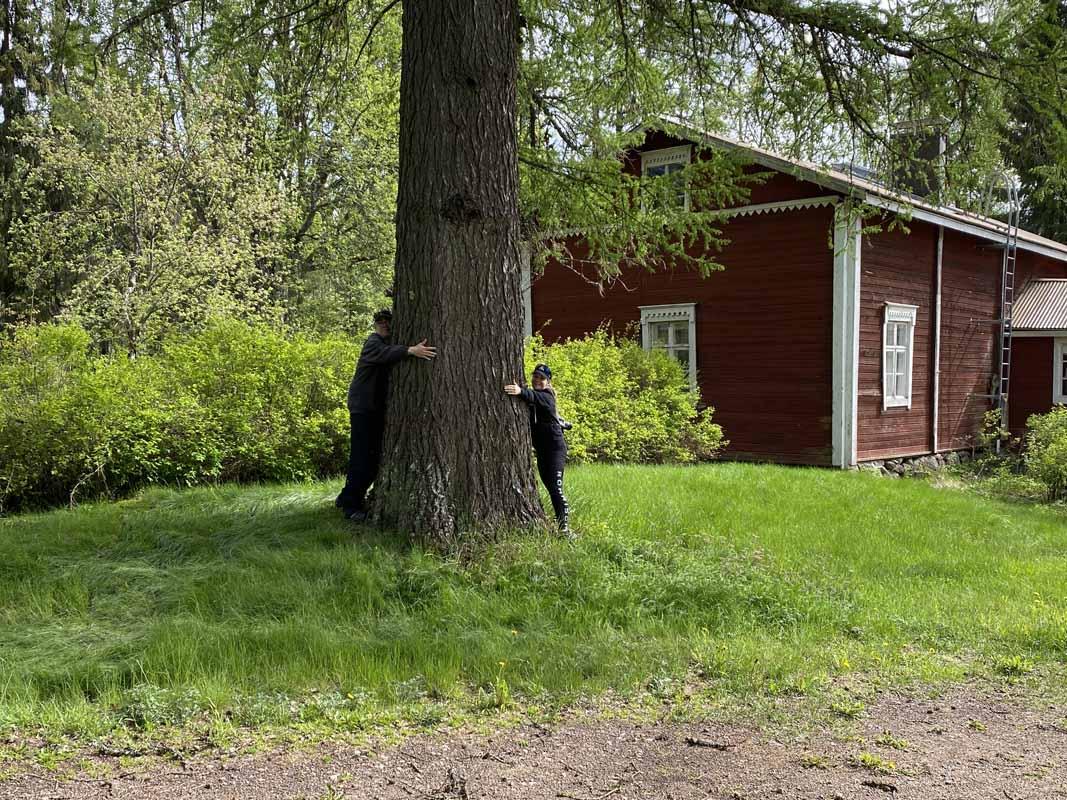 Ne Tammelat mittaamassa suurta puuta Tervalammin talon luona