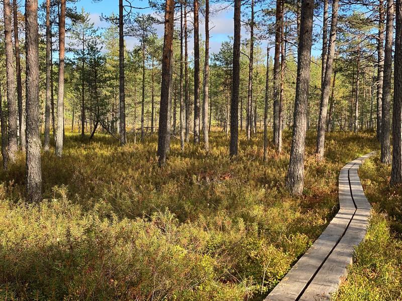 Valkmusan kansallispuiston pitkospuut